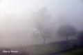 fog-12