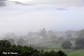 fog-17
