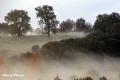 fog-34
