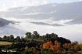 fog-37