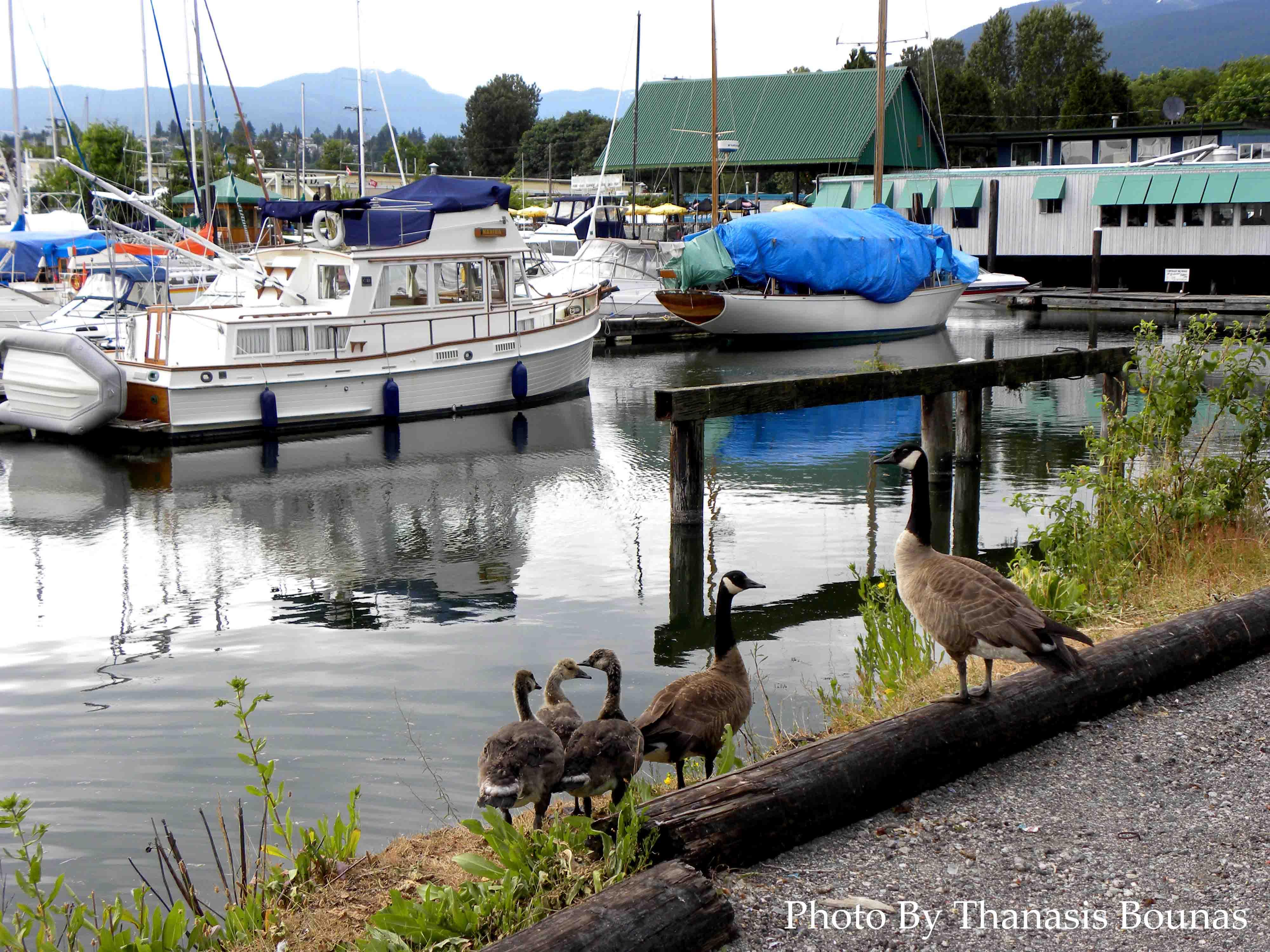 18 North Vancouver Beautiful British Columbia Photo By Thanasis Bounas